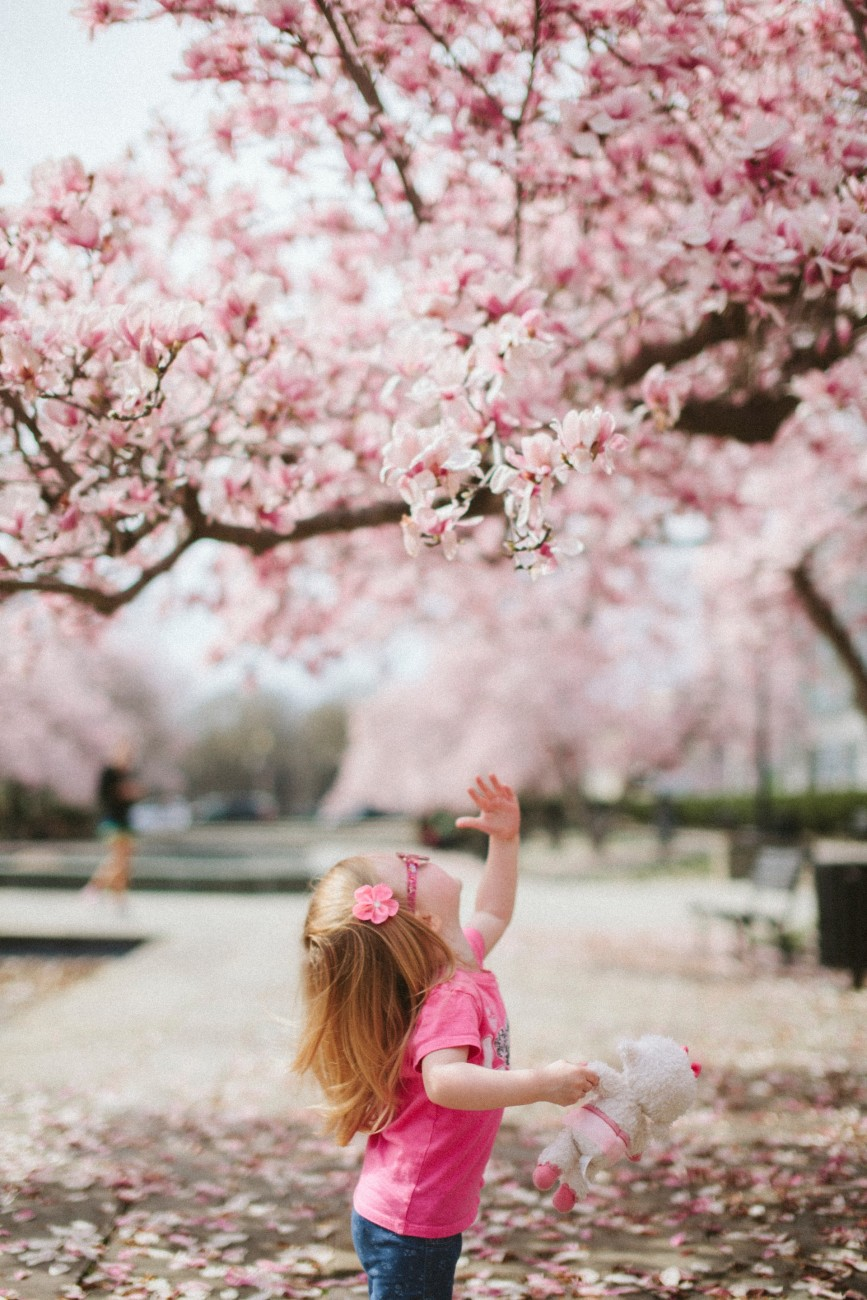 child discovering cherry blossoms